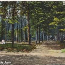 Baarnsche bos