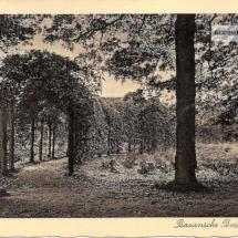 Baarnsche bos Berceau - kopie