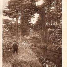 Baarnsche bos De Flesch - kopie