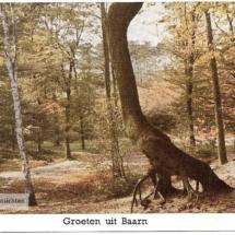 Baarnsche bos De Troon - kopie