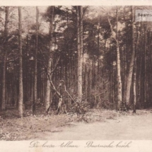 looze tollaan baarnsche bos